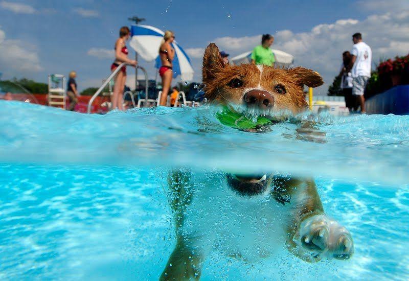 El balneario para los perros en espa a las personas for Piscinas para perros grandes